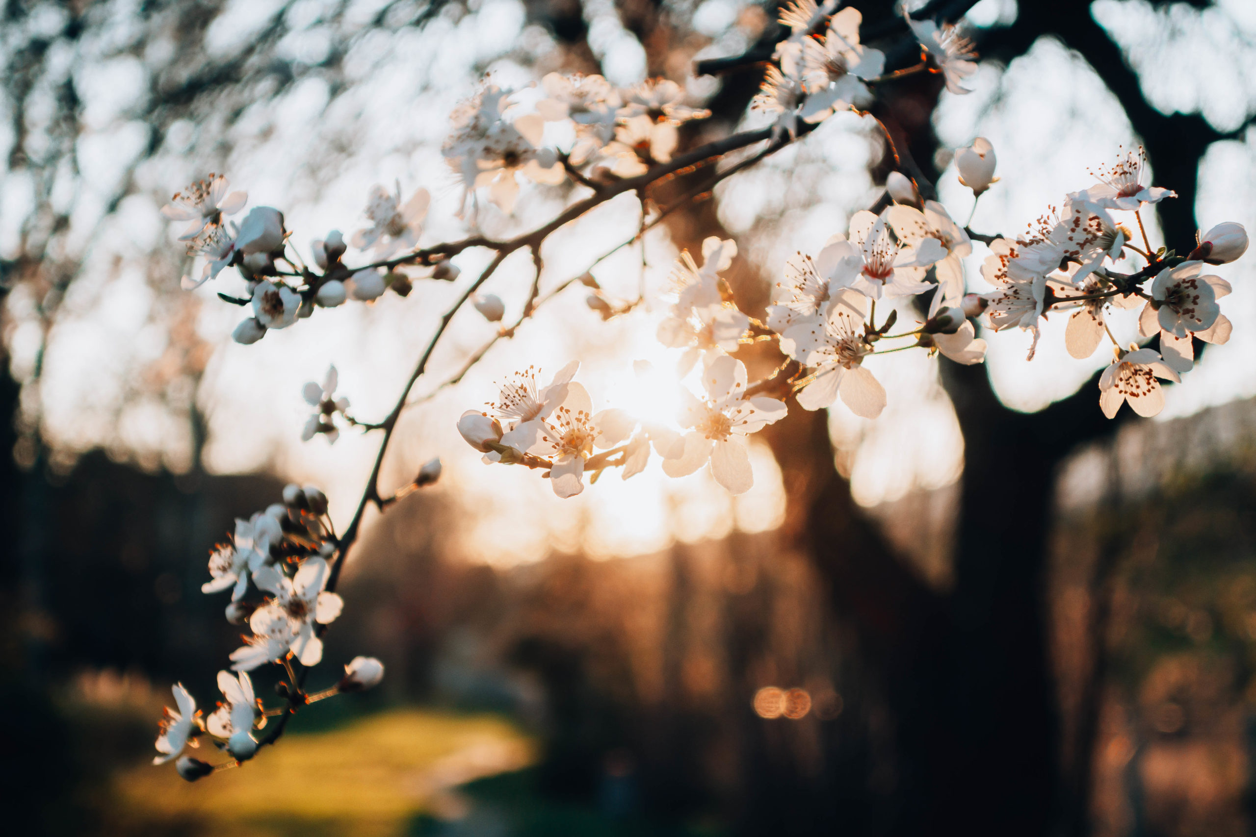 Tramonto primavera